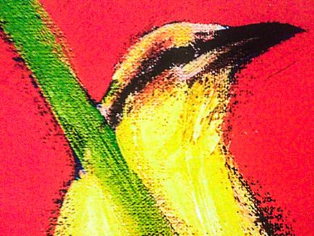 Marcelo Ariel, como um pássaro, em Jaha ñade ñañombovy'a