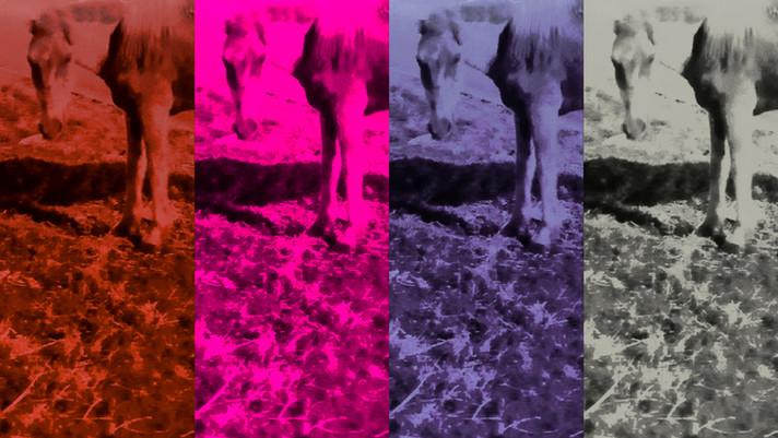 Quatro modos humanos de ser animal