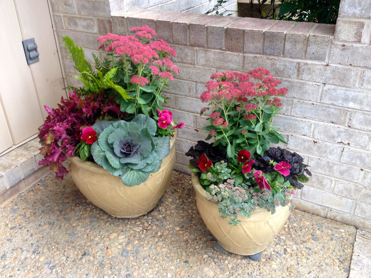 two small potted plants