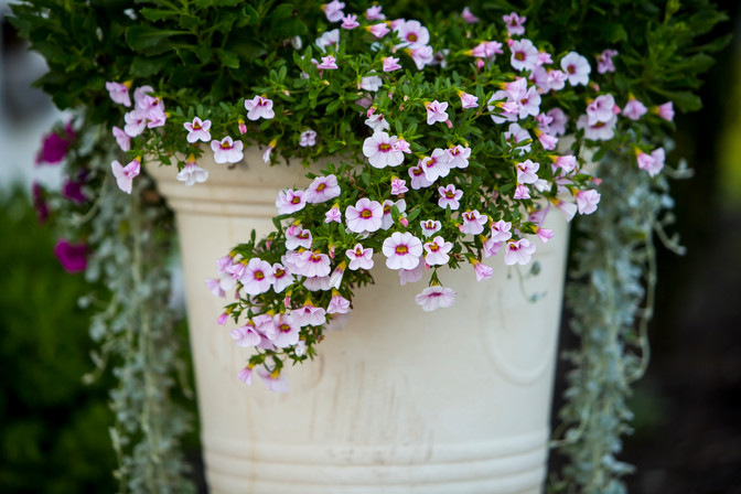 large outdoor potted plants service