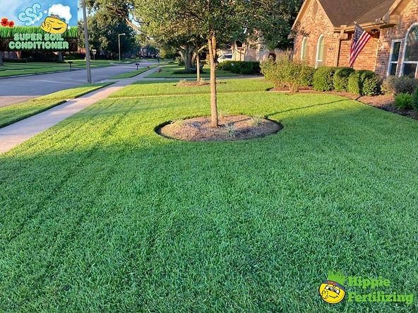 Organic Lawn Care Friendswood Tx