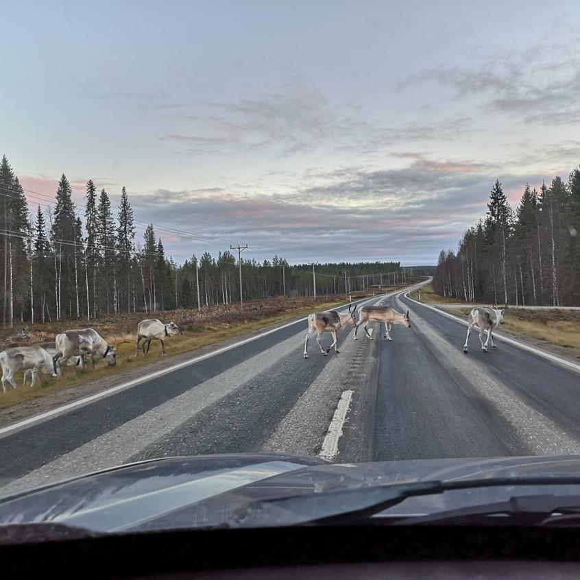 Traffic in Lapland