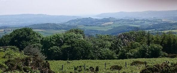 vue over torbay from tor Dartmoor.jpg