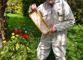 Springing into honey making