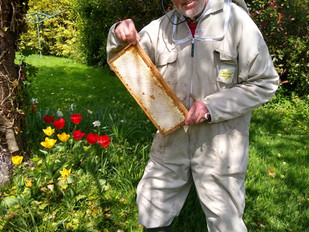 Springing into honey making