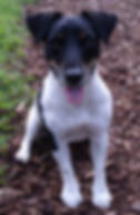 hund nrw 8-10_small.jpg