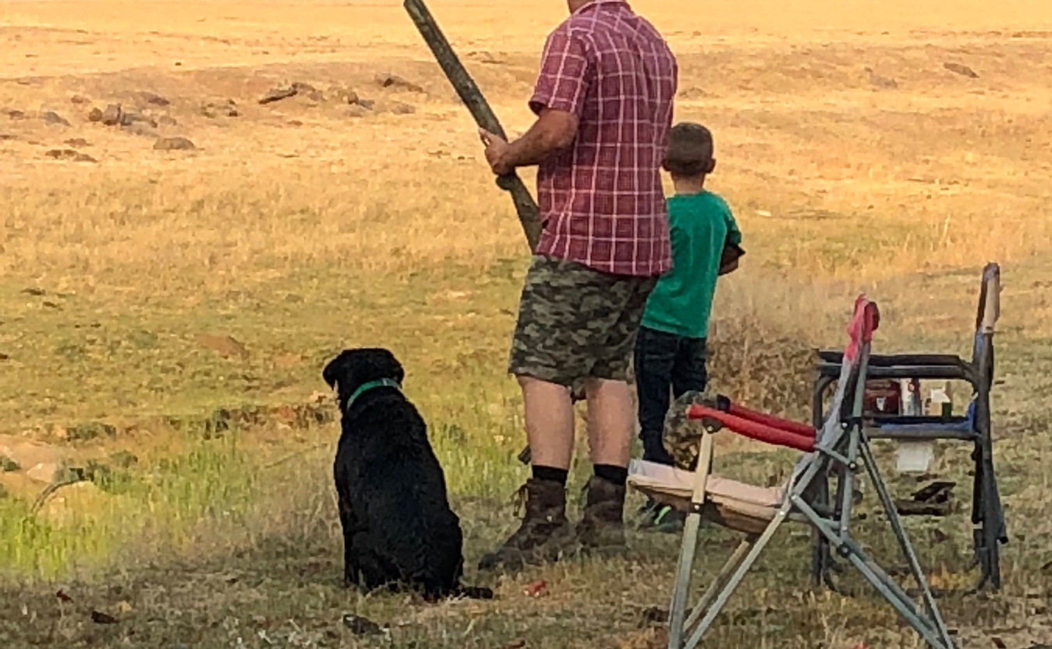 Dove Hunting with Gunther 2018