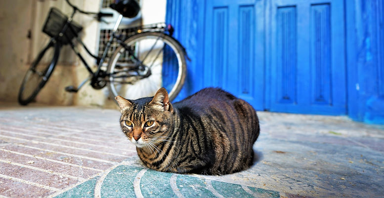 Cat with Bicycle 3.jpg