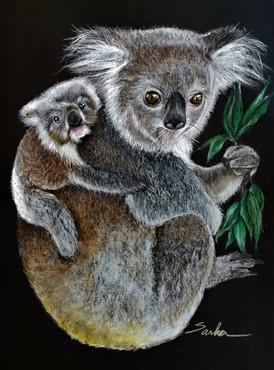 """Too Scorched To Hide: Koala & Joey"""