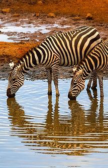 CRF Amboseli (3) 2.jpg