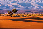 CRF Morocco Sahara (3).jpg