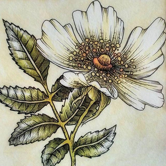 💐 Inking flowers 💐 #ink #inkflower #flower #sketch #inkstagram #inkstagrammers #inksketch #illustr