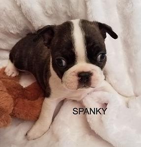 spanky a_edited.jpg