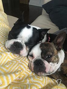 Penny and Bones.jpg