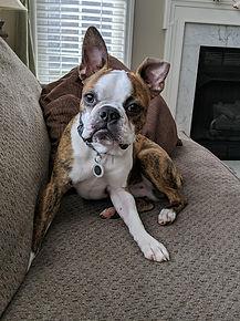 Red Head Family Dog.jpg