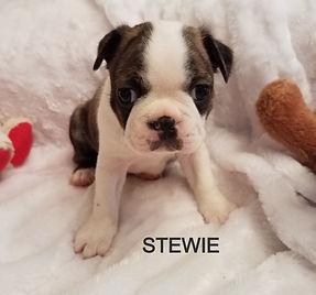 stewie a_edited.jpg