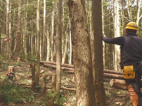 林業って危険?