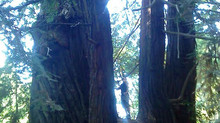 Reading to the Redwoods: Monday, Oct. 6 2014 (11:00AM)