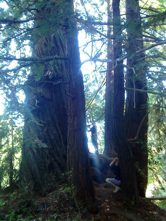 Redwood Grove.jpg