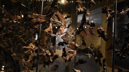 ONKALO Vidéo Musée de l'Ardenne_1.mp4