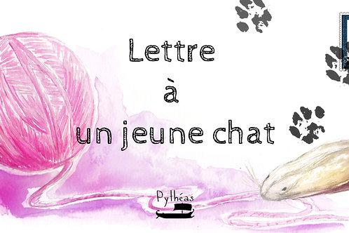 Lettre à un jeune chat