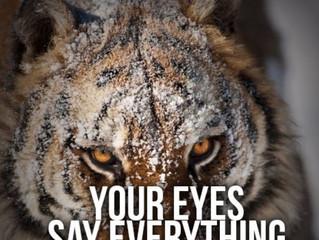 Eye control is mind control!