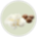 Shea Butter 03 - Background-01.png