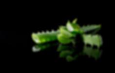 Aloe 05-01.png