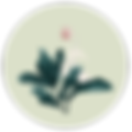 Botanical Extracts 03 - Background-01.pn