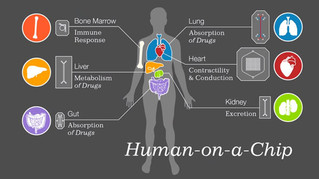 Human organs-on-chips: Harvard develops microchips lined with living cells to revolutionize medicine