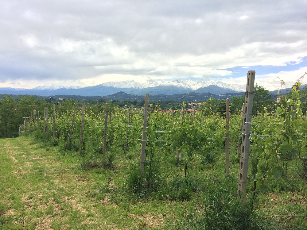 The view from Tenute Sella's vineyards in Lessona