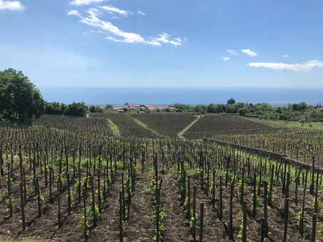 Making Etna wine with I Vigneri