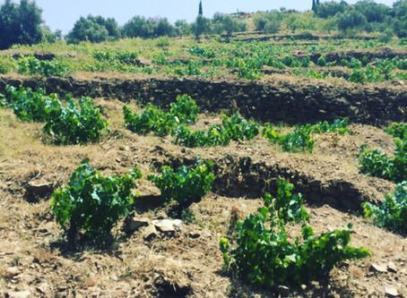 Bodegas Bentomiz - holiday wines from Malaga