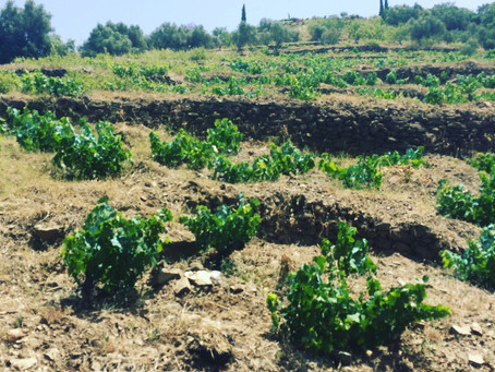 Bodegas Bentomiz - holiday wines from Malaga