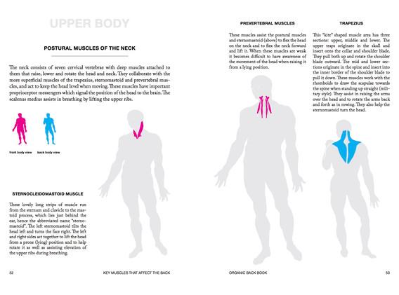 upper body anatomy.jpg