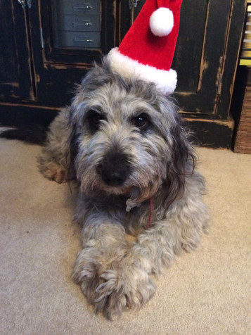 christmas Willow wishes .jpg