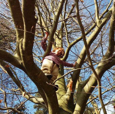 Hoch im Baum