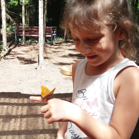 """""""Schmetterling du kleines.."""