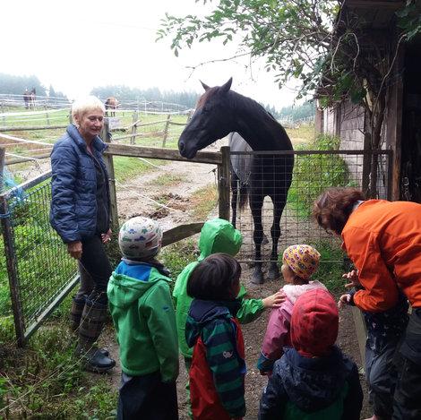Besuch beim Pferdehof