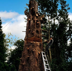 Tree Removal (most heights)
