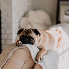 מהו תהליך ההזדקנות אצל כלבים ? ממה נגרמת ? כיצד ניתן למנוע?