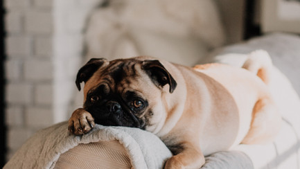 There's No Place Like Home: 7 Reasons Why In-Home Pet Care is Best for Pets