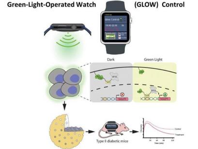İnsülin Üretimini Kontrol Etmek İçin Genleri Akıllı Saatle Etkinleştirmek