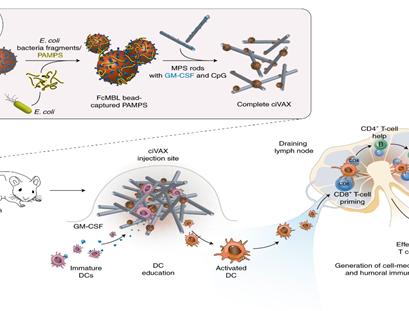 Bakteri Enfeksiyonuna Karşı Biyomateryal Tabanlı Aşı