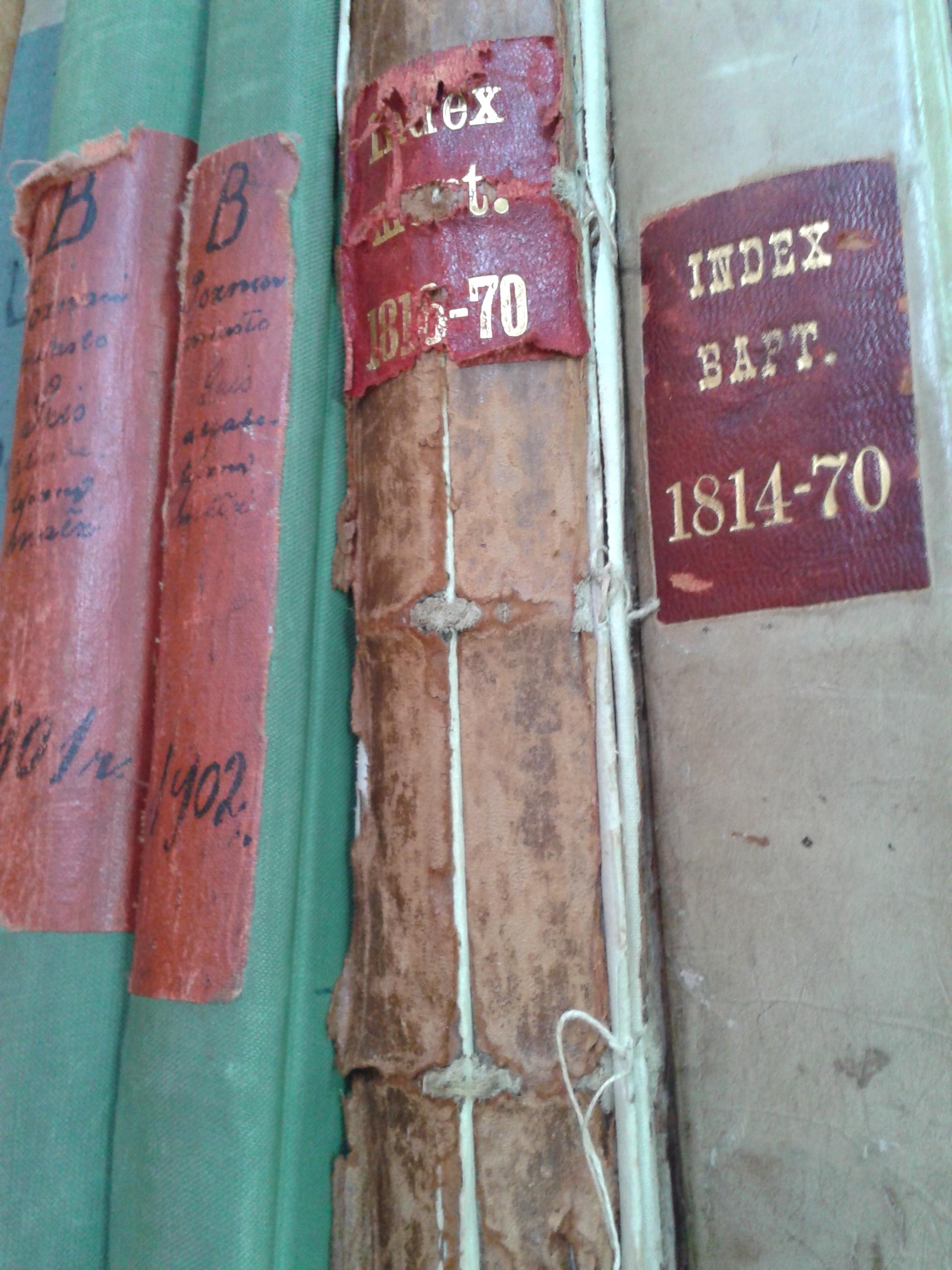 Index in genealogy