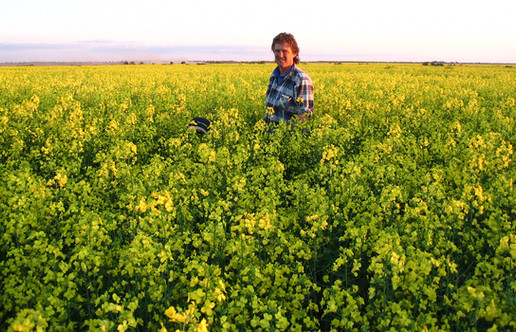 Rosco in Canola_Slider 2.jpg