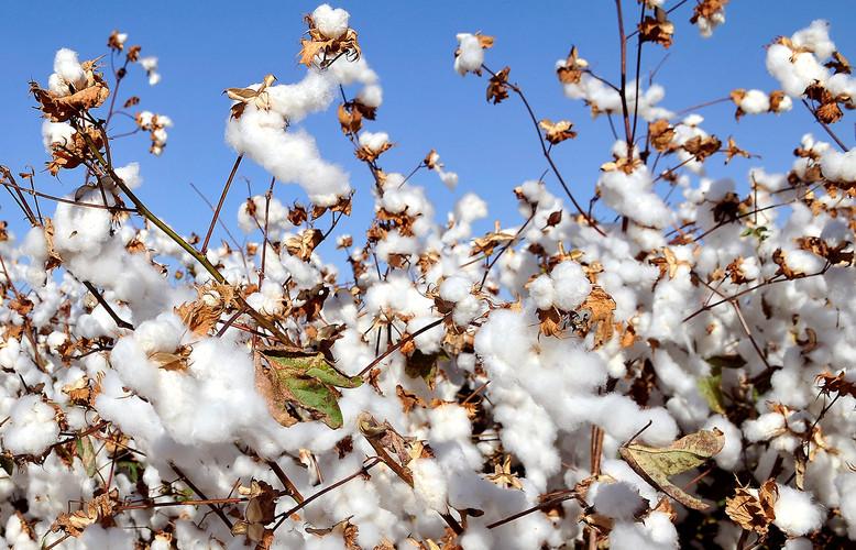 Cotton_Slider 5.jpg