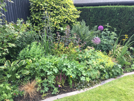 Herbacceous border.jpg