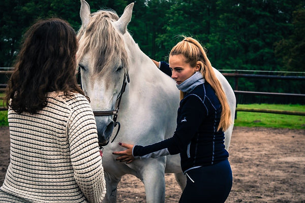 pferdegestuetztes-coaching-achtsamkeit-u