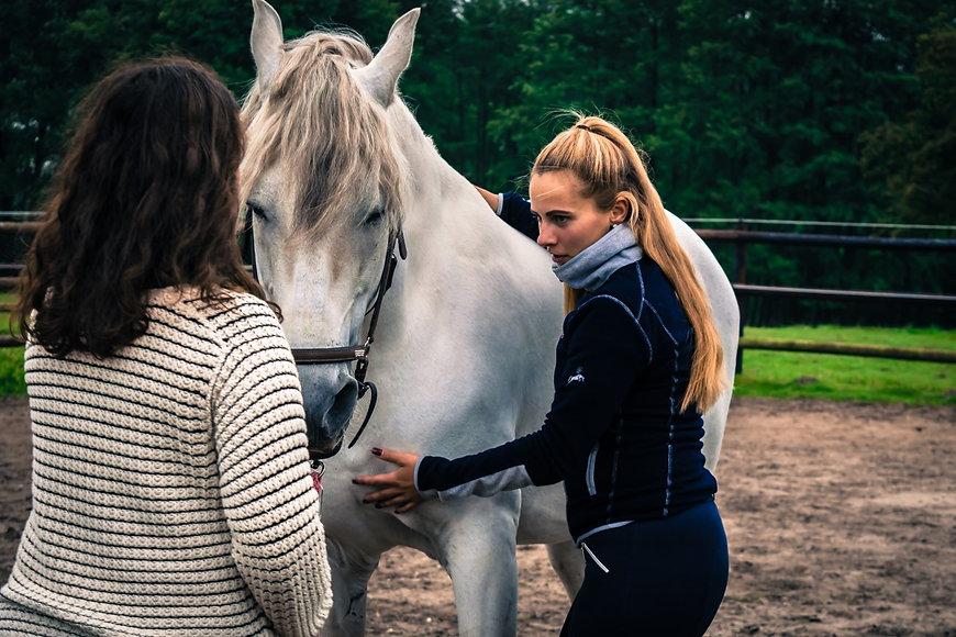 pferdegestuetztes-coaching-achtsamkeit-und-mbsr-zur-entspannung-bei-stress.jpg